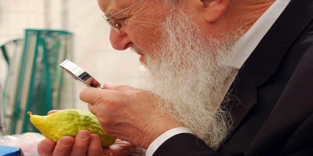 Etrog What is Sukkot 2017 All About?
