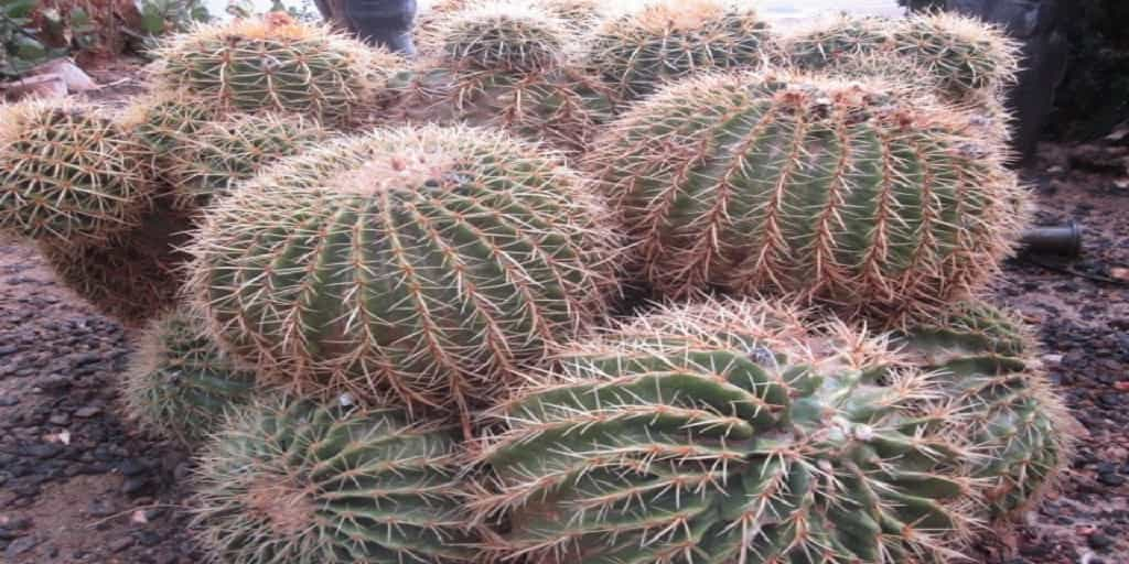 Negev-Cactus What Do You Know About Modern Israelis?